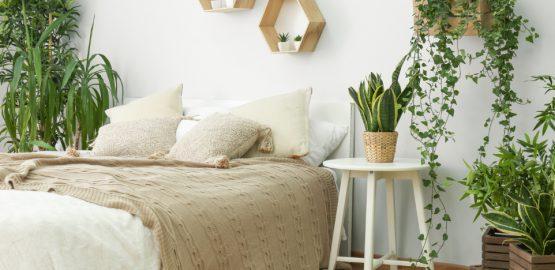 izbove-rastliny-vhodne-do-spalne